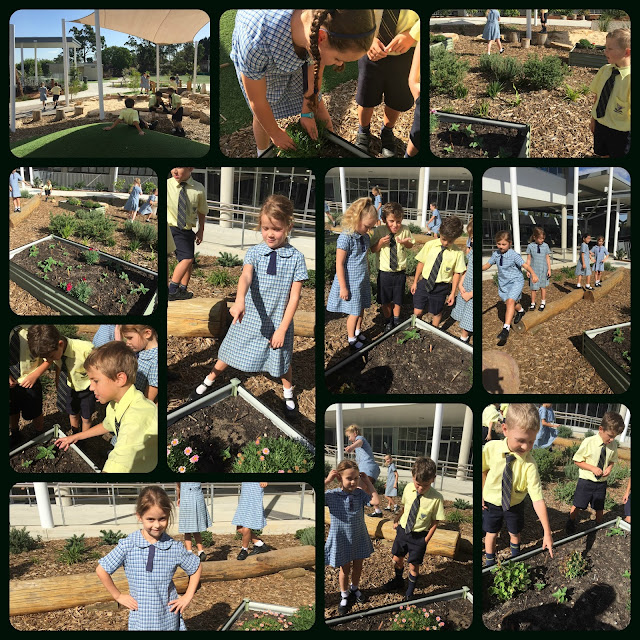 Looking at our sunflowers and enjoying a break from our