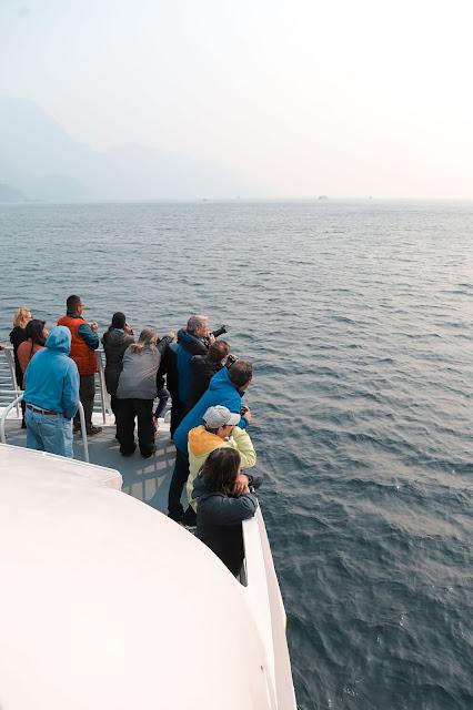 Orcas, Major Marine Tour, Kenai Fjords