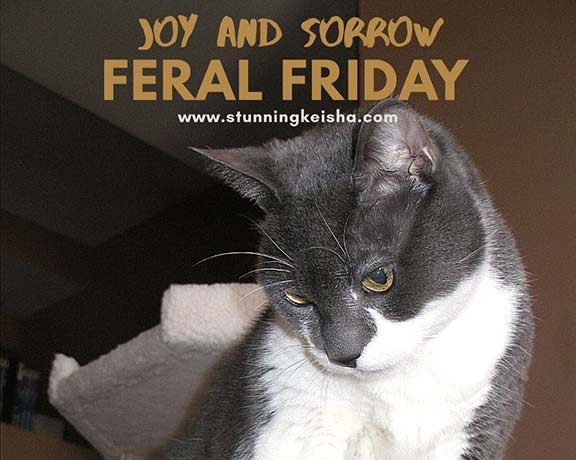 Feral Friday: Joy and Sorrow