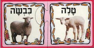 Овца баран ягненок картинки
