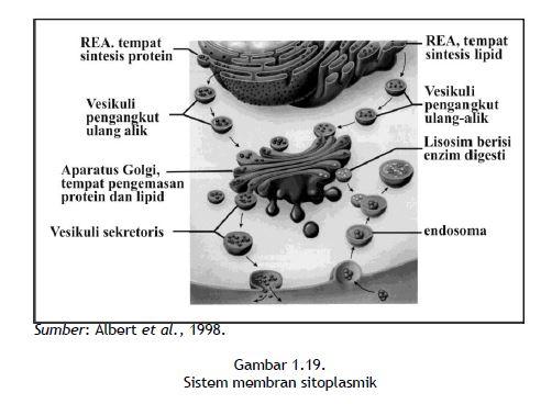 Sistem membran sitoplasmik