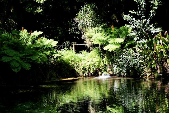 lago, acqua, vegetazione,