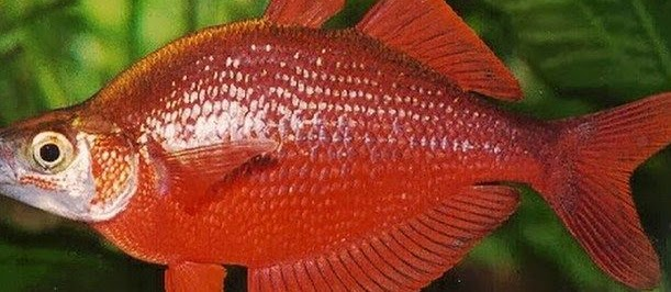 Rainbow Fish Aquarium