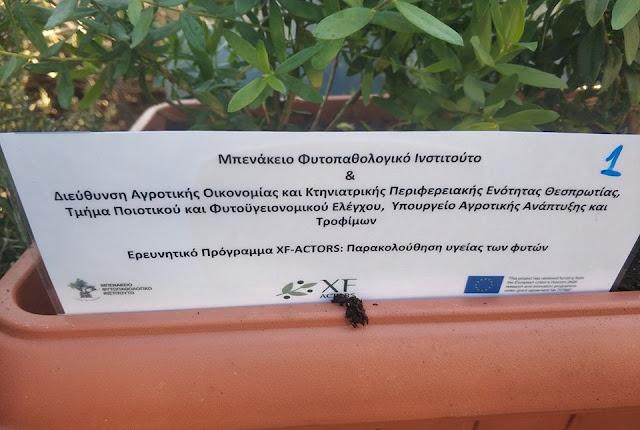 Παγίδες για την έγκαιρη ανίχνευση του επικίνδυνου βακτηρίου Xyllela fastidiosa τοποθετήθηκαν στο λιμάνι της Ηγουμενίτσας