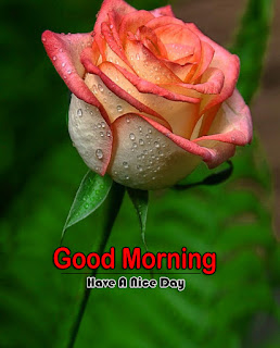 New Good Morning 4k Full HD Images Download For Daily%2B50