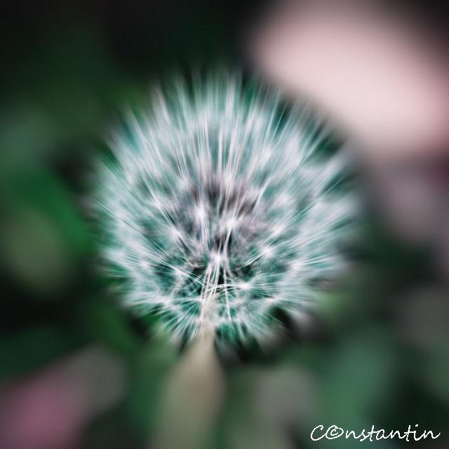 Păpădia - mpresionism (zooming) - blog FOTO-IDEEA