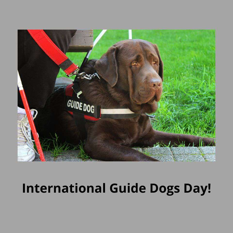 International Guide Dog Day Wishes for Instagram