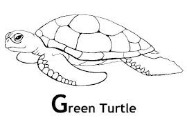 Gg For Green Turtle With Name Coloring Pages