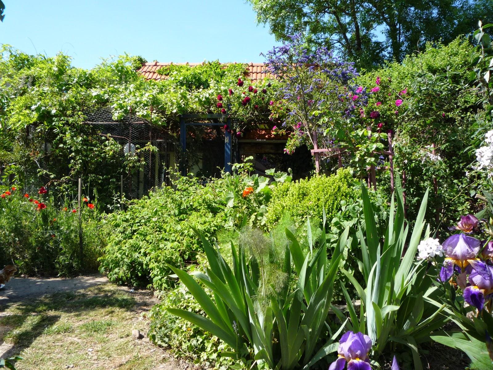 Organic forest garden, Normandy France