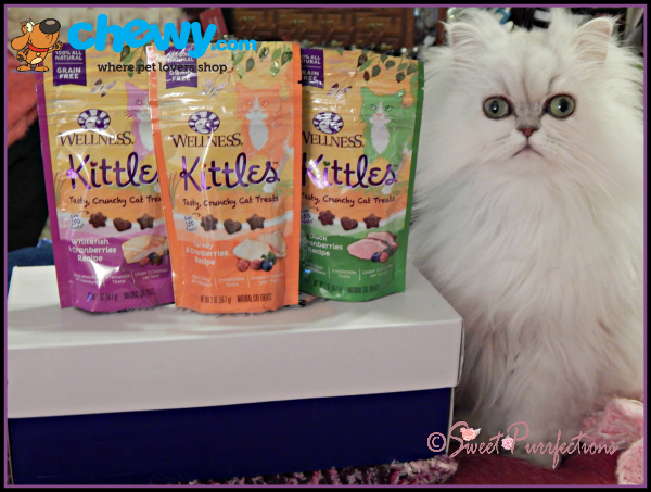 Brulee introducing Wellness Kittles Treats
