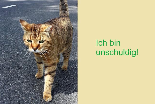 unschuldige Katze
