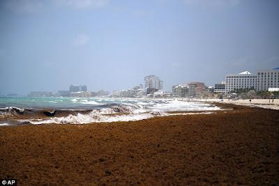 O sargasso nas praias de Cancun