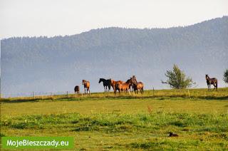 bieszczady konie