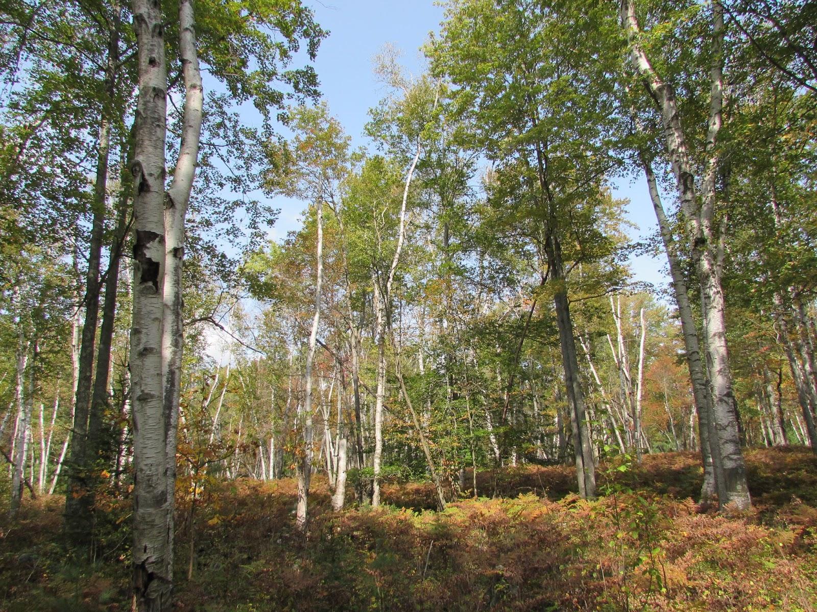 Pa Autumn Elk Adventures Interesting Pennsylvania And Beyond