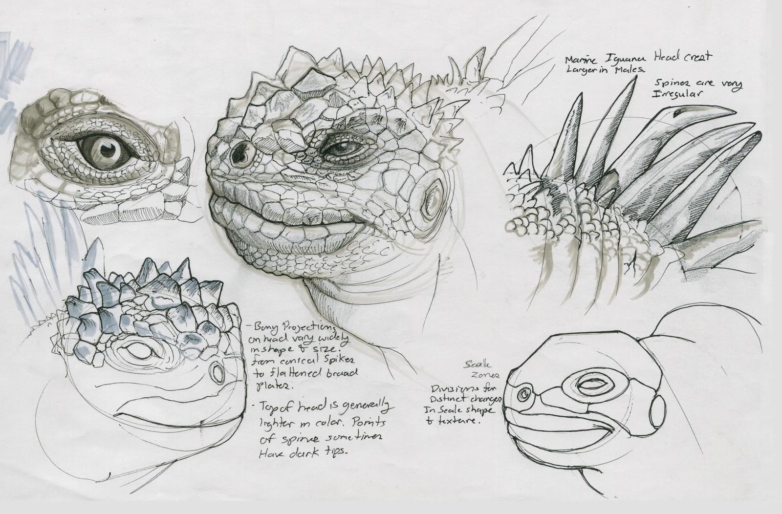 galapagos iguanas coloring pages - photo #35