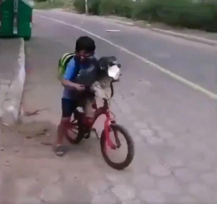 Niño le pone cubrebocas a su perro para ir juntos a la tienda y se hace viral
