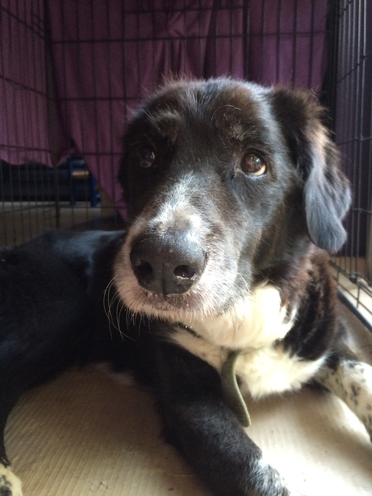 André: Oct 2001 - 24 July 2015