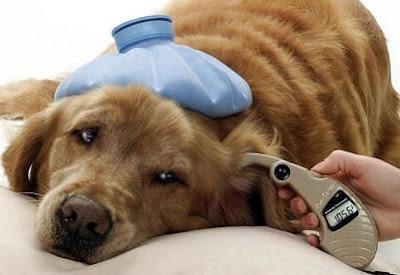 como evitar el golpe de calor en perros