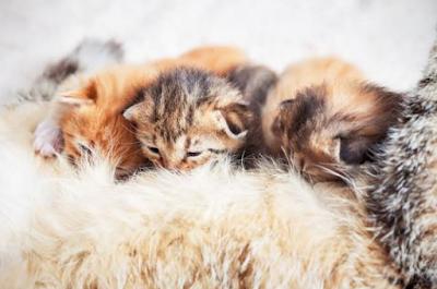 kucing lahiran - [ Mudah ] Ternyata Inilah Ciri - Ciri Kucing Hamil Dan Cara Merawatnya