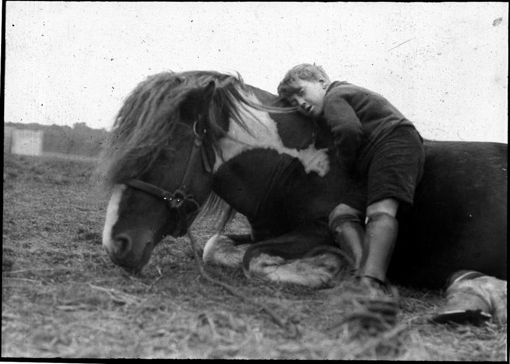 Farrier Work with the Older Horse