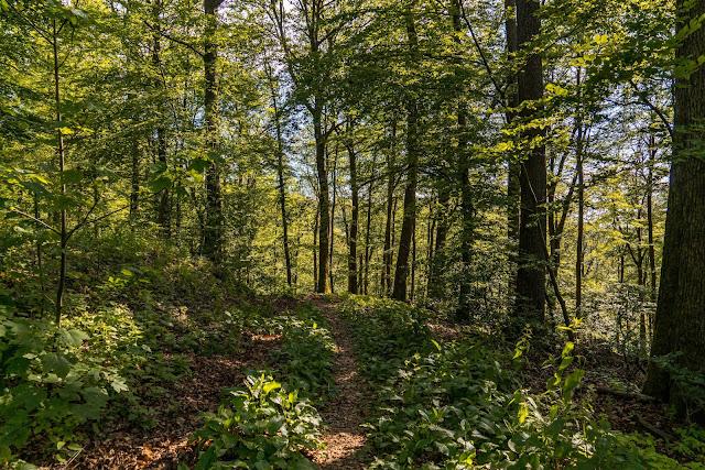 Erzquellweg - Mudersbach - Naturregion Sieg | Erlebnisweg Sieg | Natursteig-Sieg 12