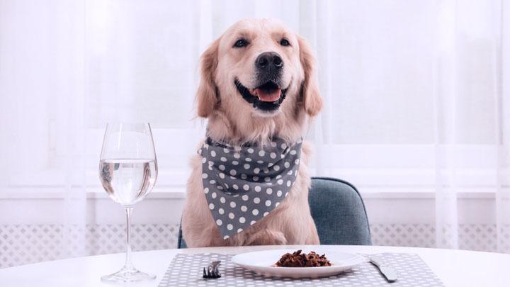 dog-pancreatitis-diet-homemade