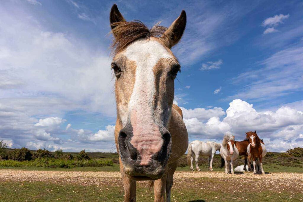 The Basic Expenses of Horse Ownership