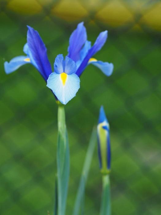zdjęcie kwiatów na niskiej przysłonie
