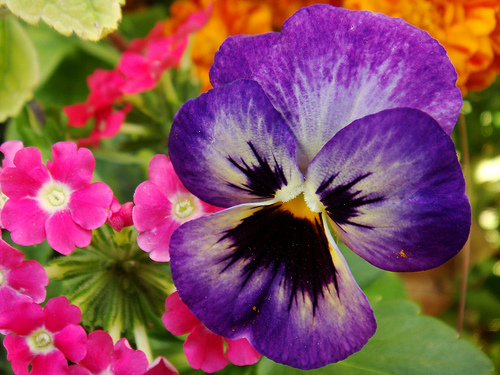 Interesting Facts Top 10 Most Beautiful Flowers Of The World