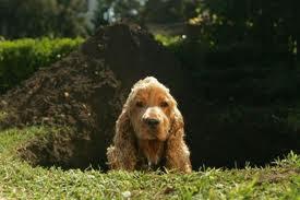 Cómo evitar que el perro excave