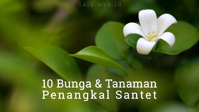 Jenis Tanaman dan bunga Penangkal Santet