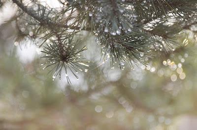 pin jardin pluie gouttes