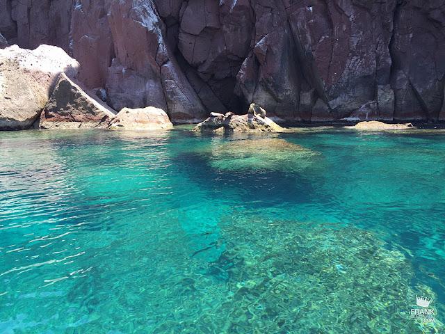 Leones marinos en isla espiritu santo