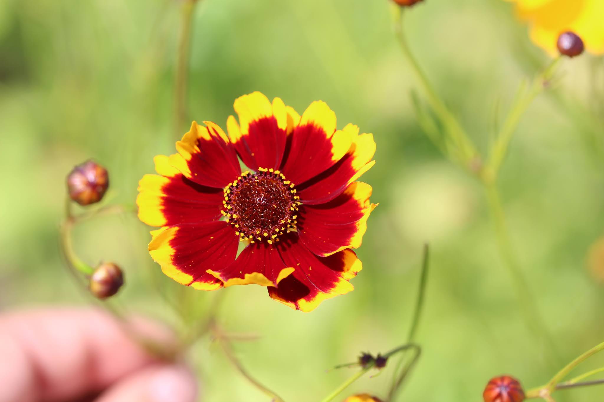 Victory Gardens For Diversity Petal Power A Sneak Peak