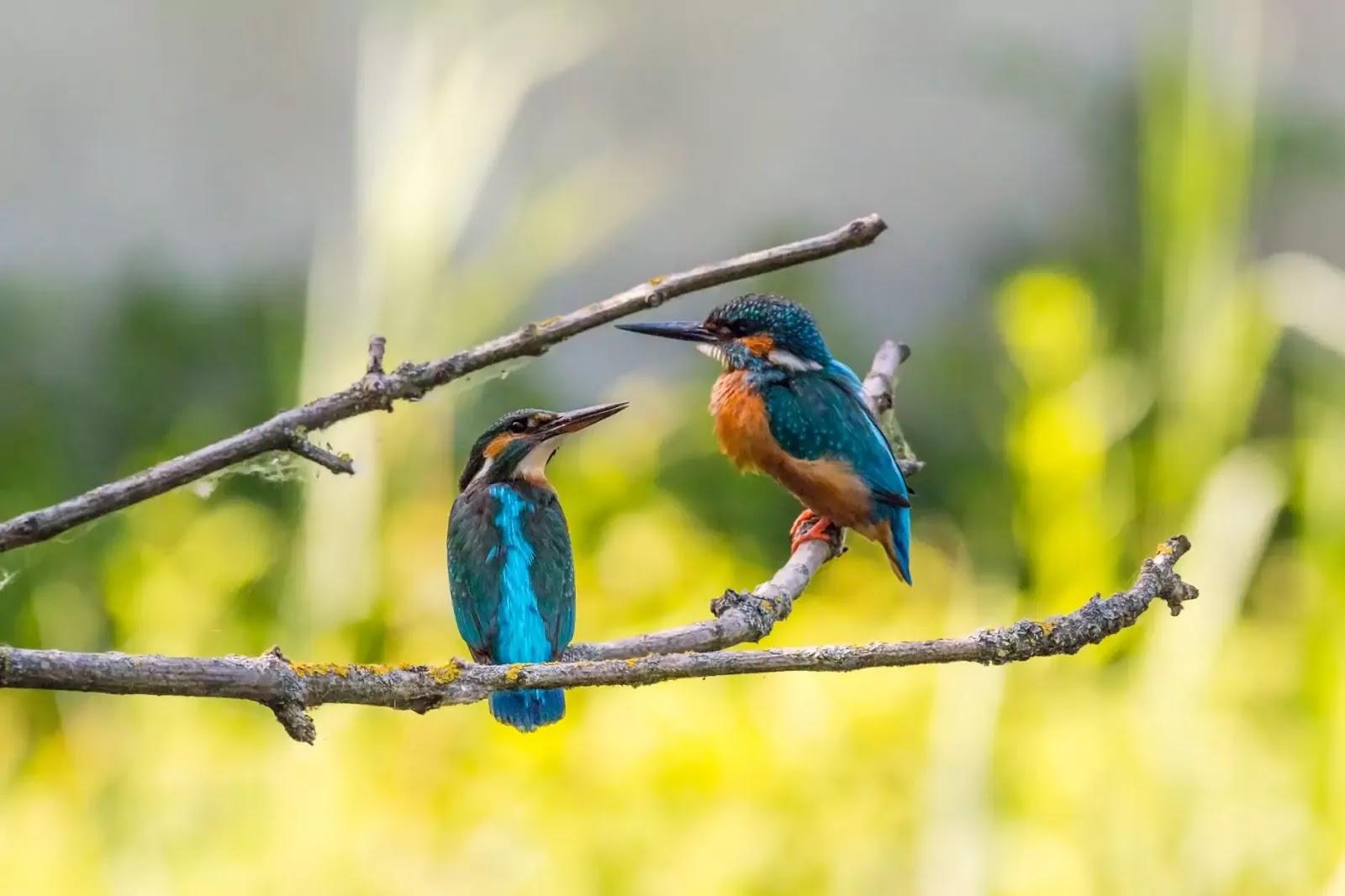 Love birds hd wallpaper free download, African love birds hd wallpaper, Love birds wallpaper hd 1080p