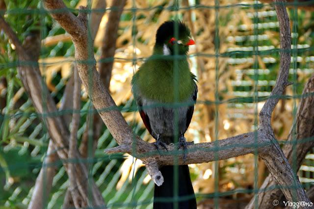 Uno dei colorati pappagalli ospiti al parco