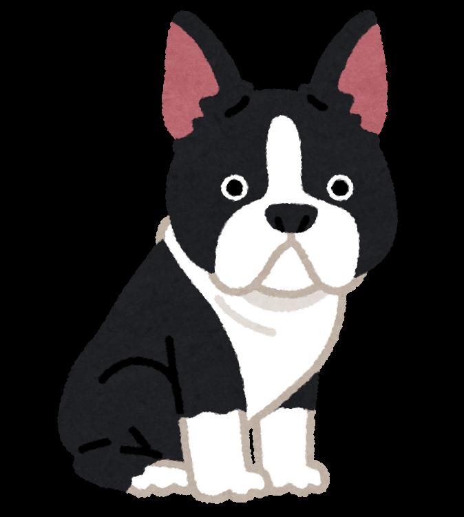 ボストン・テリアのイラスト(犬)
