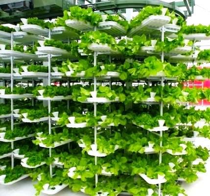 Agricultural vertical garden using modular hydroponic system