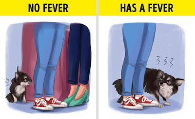 6 Signs That Your Dog Has a Fever you should know (and What to Do While You Wait for the Vet)