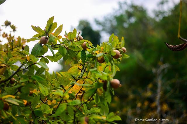 Jesienne owoce - Toskania, blog Dom z Kamienia