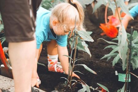 Ensinando jardinagem