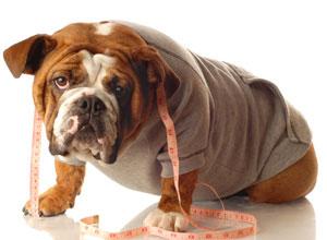 Obese-dog