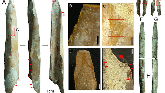 Bone tools found in Kimberley region are among oldest discovered in Australia