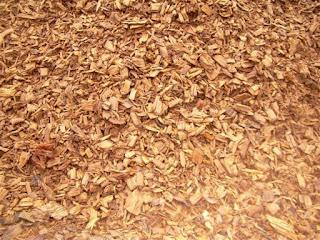 La biomas y sus aplicaciones