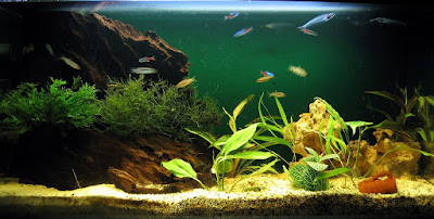 How to Setup a Fresh water Aquarium with Exotic Fishes