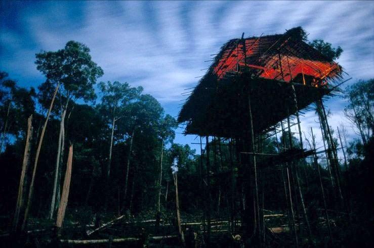 casa sobre varas a altura media de la tribu korowai