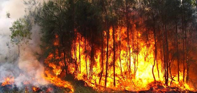 Australian Bushfires: Forest fire