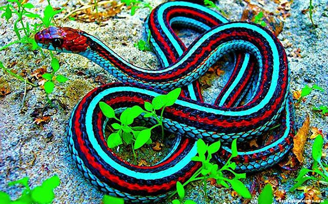 Ular dan jenis - jenis ular - berbagaireviews.com