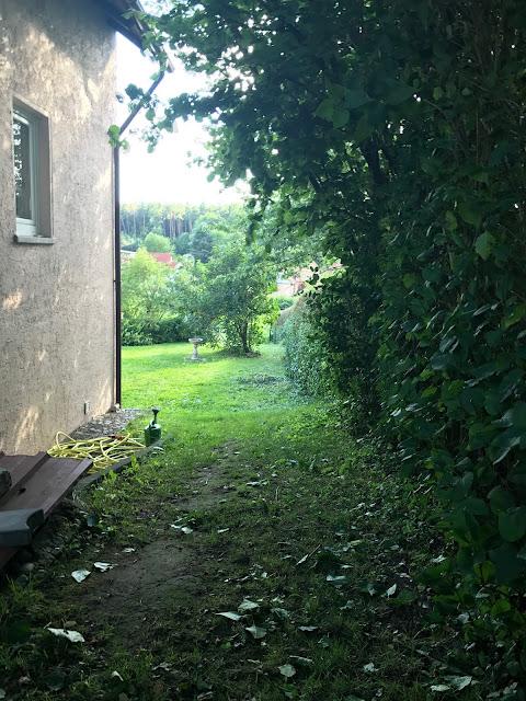 Hecke im Vorgarten (c) by Joachim Wenk