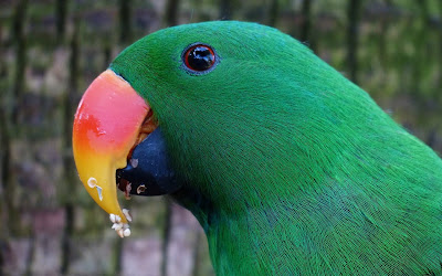 green parrot widescreen resolution hd wallpaper